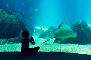 Oceanaria i zoo